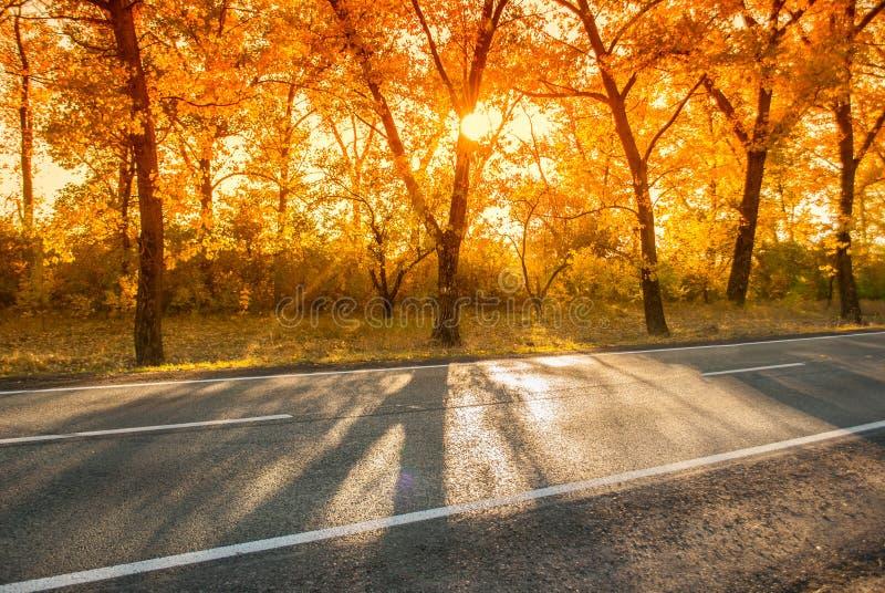 Δρόμος το απόγευμα φθινοπώρου με την ηλιοφάνεια στοκ εικόνες