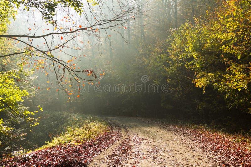 Δρόμος φθινοπώρου μέσω του δάσους με τις ακτίνες ήλιων θετικών πλευρών στοκ εικόνες
