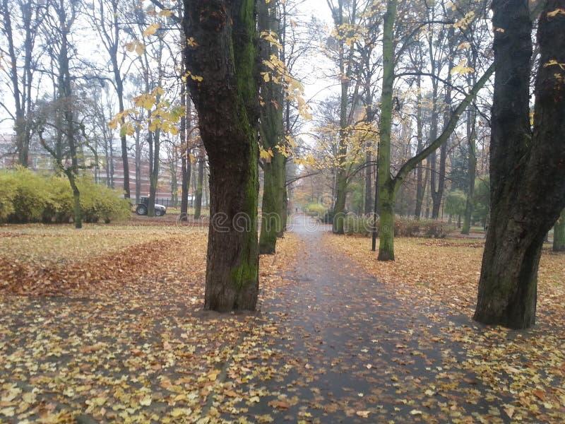 Δρόμος φθινοπώρου μέσω του πάρκου στοκ φωτογραφία με δικαίωμα ελεύθερης χρήσης