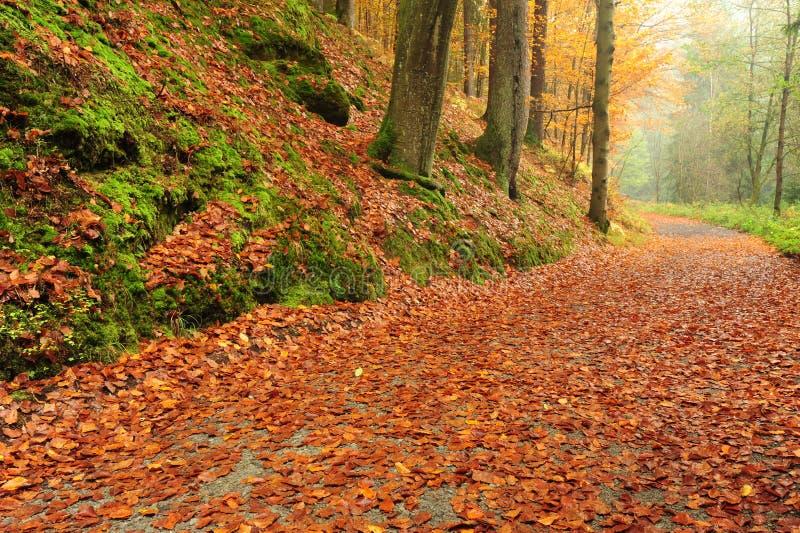 Δρόμος φθινοπώρου με τα φύλλα στοκ εικόνα