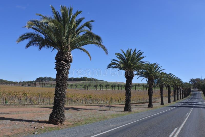 Δρόμος Seppeltsfield στη Νότια Αυστραλία κοιλάδων Barossa στοκ εικόνα