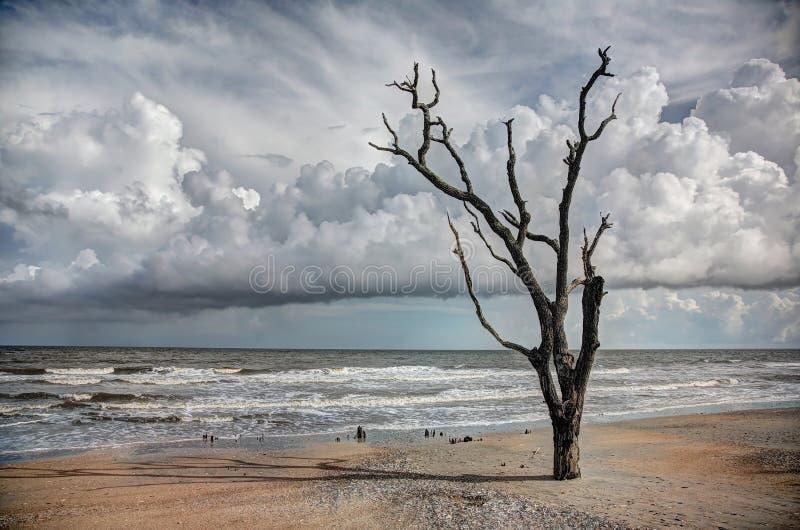 Δρύινα δέντρα στην άμμο στην ακτή στοκ εικόνες