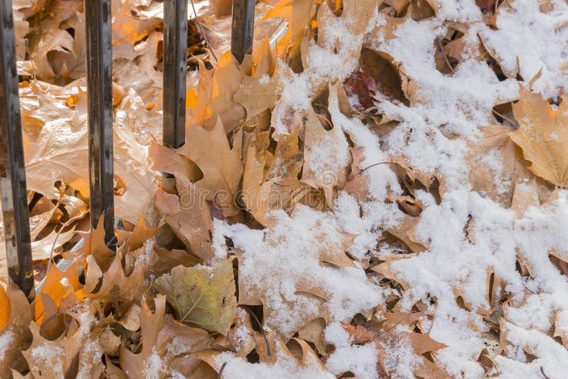 Δρύινα φύλλα φθινοπώρου κατά μήκος ενός φράκτη σιδήρου κάτω από ένα ελαφρύ χιόνι στοκ φωτογραφία με δικαίωμα ελεύθερης χρήσης
