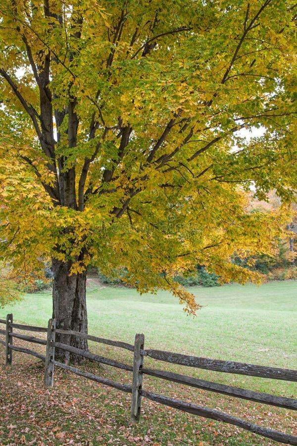 Δρύινοι δέντρο και φράκτης φθινοπώρου στοκ εικόνα με δικαίωμα ελεύθερης χρήσης