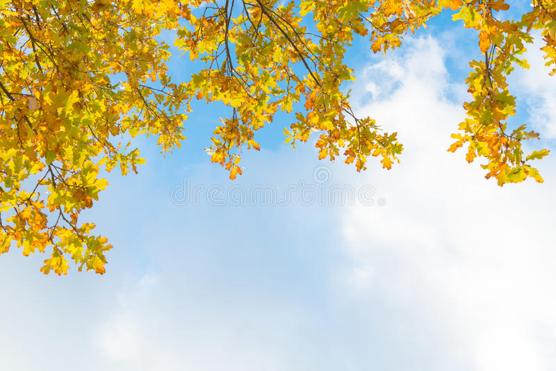 Δρύινοι κλάδοι δέντρων - κίτρινο φύλλωμα φθινοπώρου μπροστά από το μπλε ουρανό α στοκ εικόνα