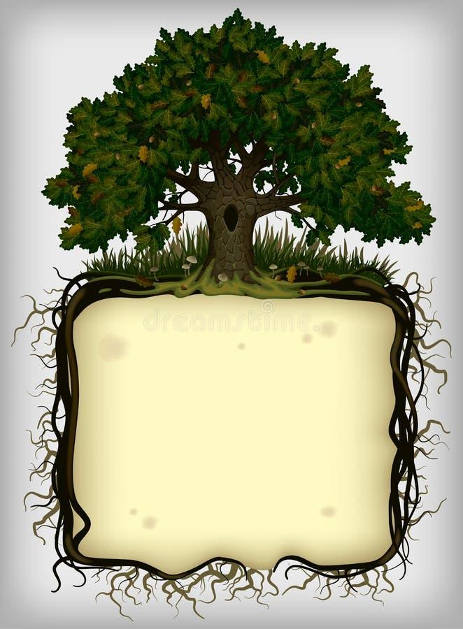 Δρύινο δέντρο με το πλαίσιο ριζών ελεύθερη απεικόνιση δικαιώματος