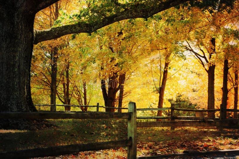 δρύινο δέντρο φθινοπώρου στοκ εικόνα