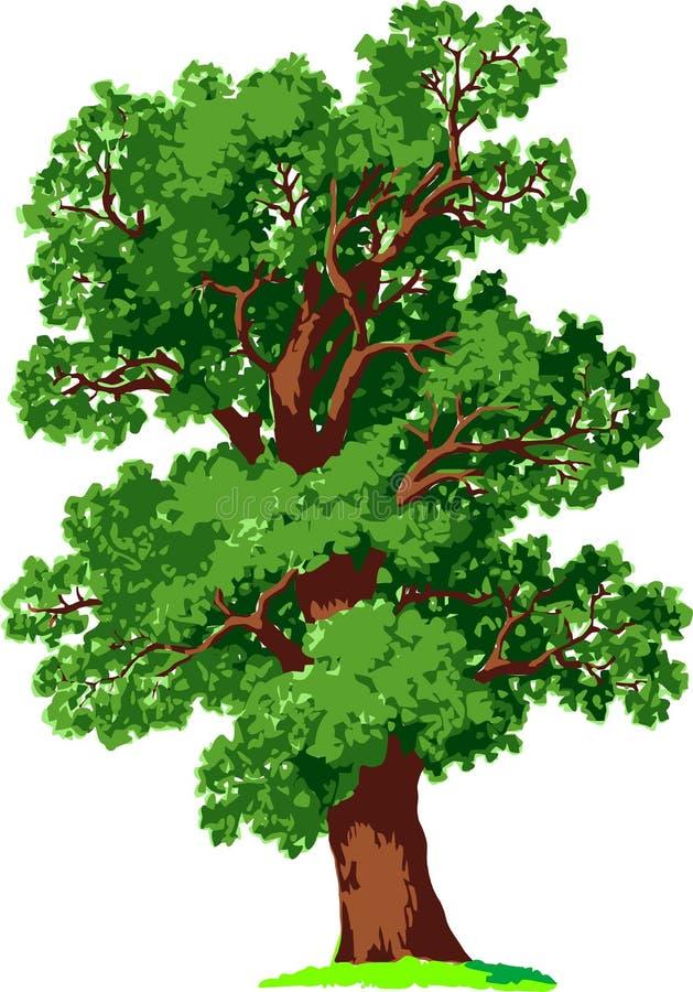 δρύινο διάνυσμα δέντρων ελεύθερη απεικόνιση δικαιώματος