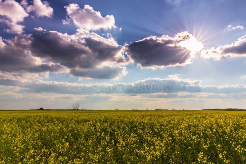 Δυσοίωνοι σύννεφα θύελλας και τομείς canola στοκ φωτογραφία