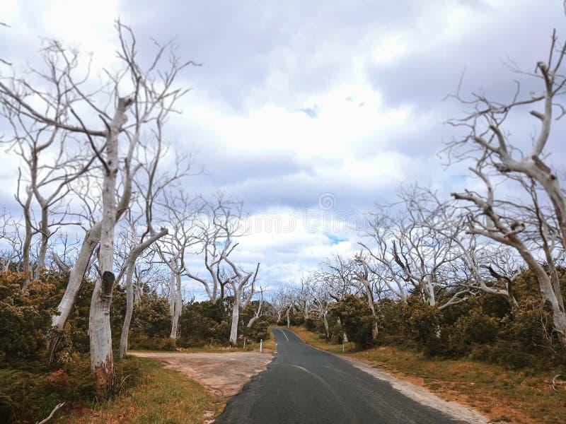 Δυσοίωνος αυστραλιανός δρόμος με τα νεκρά δέντρα στοκ φωτογραφίες με δικαίωμα ελεύθερης χρήσης