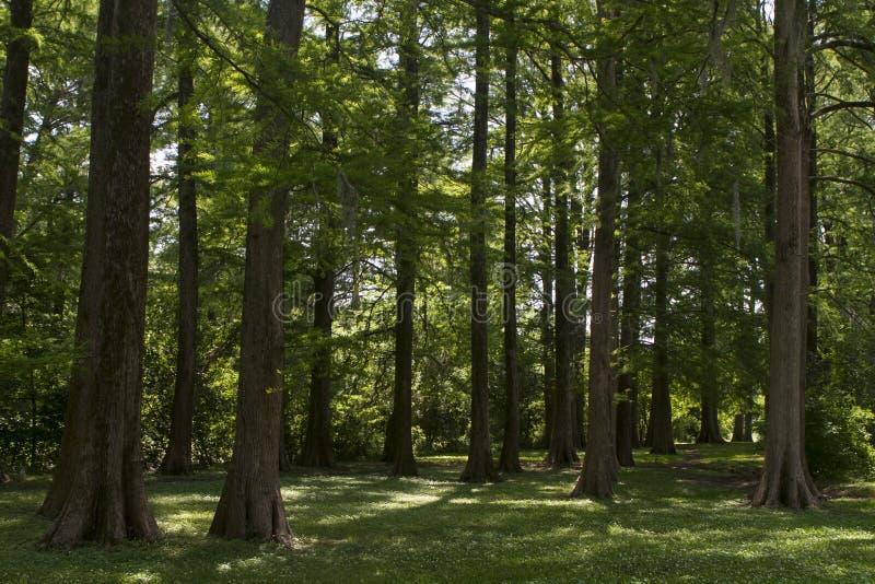 Δωδεκάδες των δέντρων σε ένα λιβάδι στοκ εικόνες