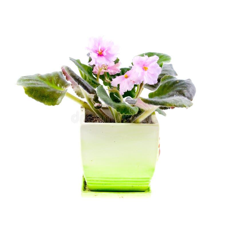 δωμάτιο λουλουδιών στοκ φωτογραφίες με δικαίωμα ελεύθερης χρήσης