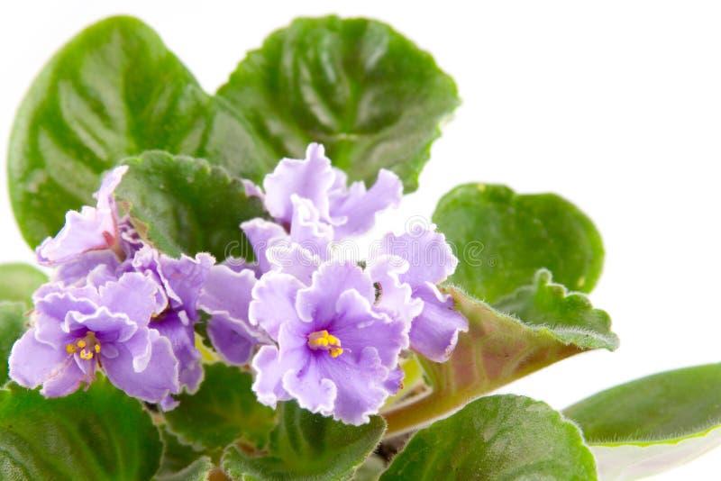 δωμάτιο λουλουδιών στοκ εικόνα με δικαίωμα ελεύθερης χρήσης