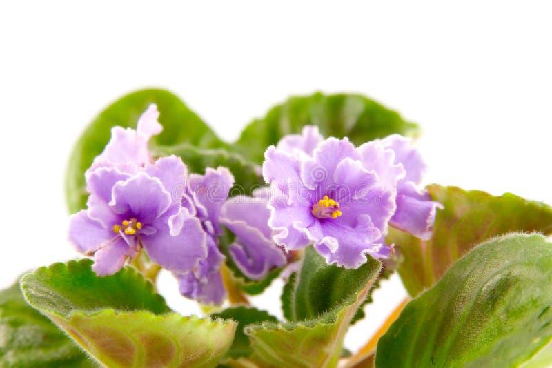 δωμάτιο λουλουδιών στοκ εικόνες