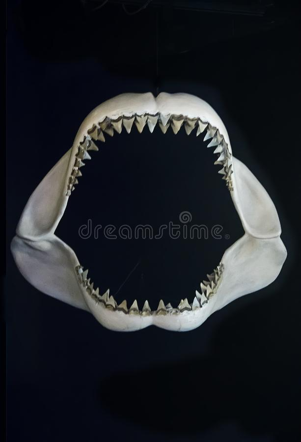 Δόντια καρχαριών στο απόκρυφο ενυδρείο στο απόκρυφο Κοννέκτικατ στοκ εικόνες