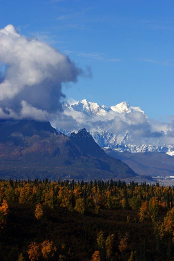 Download δόντι βουνών αλκών στοκ εικόνα. εικόνα από γκρίζος, άσπρος - 398377