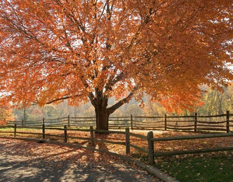 δόξα φθινοπώρου στοκ εικόνες