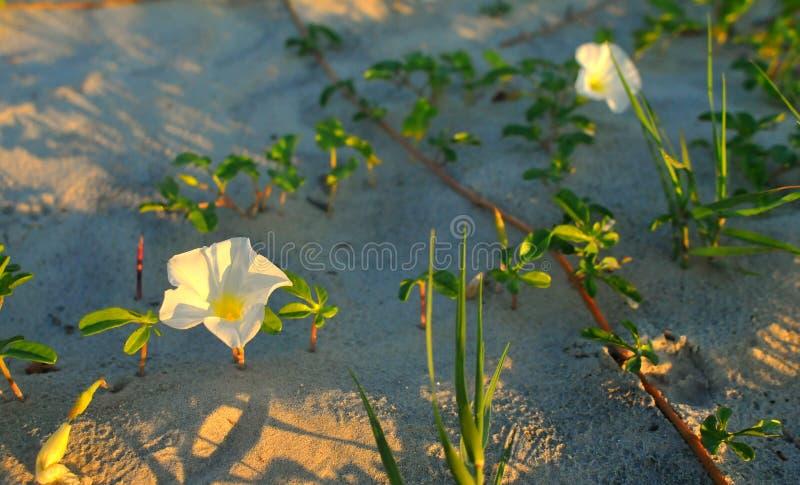 Δόξες πρωινού στην παραλία στοκ εικόνες