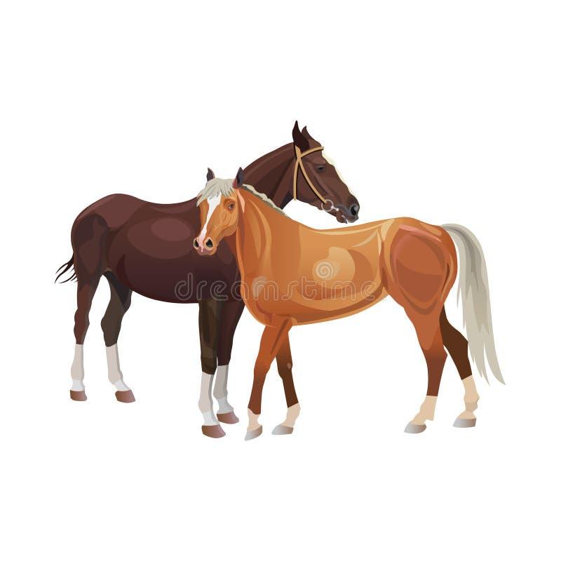 Δύο άλογα που στέκονται από κοινού διανυσματική απεικόνιση