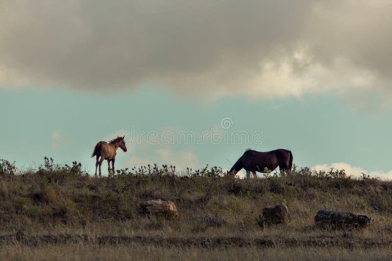 Δύο άλογα σε έναν τομέα στοκ εικόνες με δικαίωμα ελεύθερης χρήσης