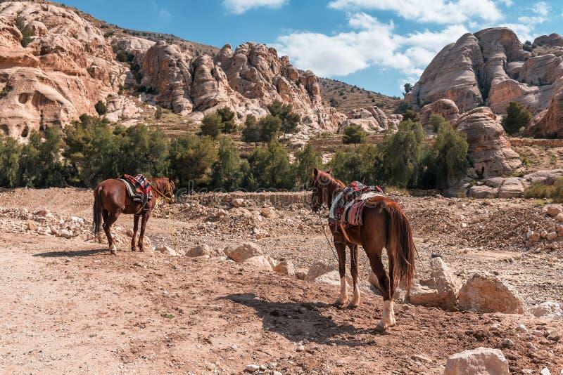 Δύο άλογα σε βραχώδη βουνά στοκ φωτογραφία με δικαίωμα ελεύθερης χρήσης