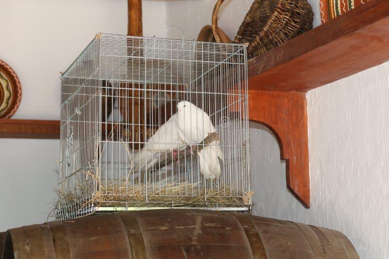 δύο άσπρο κλειστό περιστέρια κλουβί μέσα στο σπίτι στοκ εικόνες με δικαίωμα ελεύθερης χρήσης