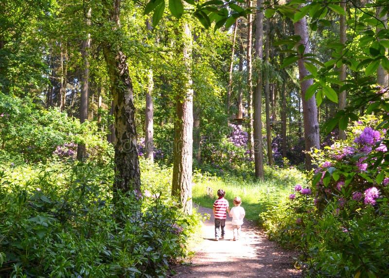 Δύο αγόρια που περπατούν στην πορεία μέσω των ξύλων στοκ φωτογραφίες