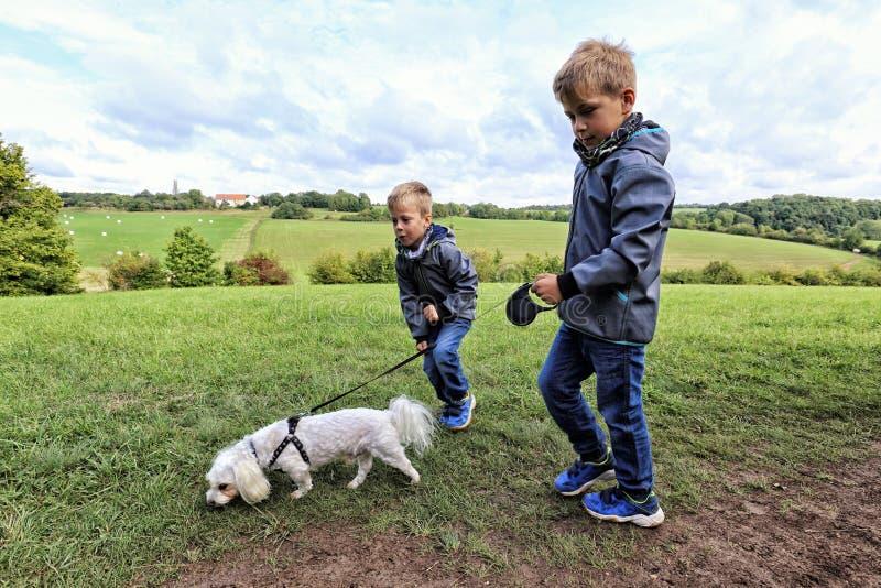 Δύο αγόρια που περπατούν το μικρό άσπρο σκυλί στοκ εικόνες