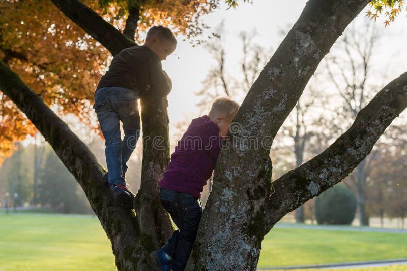 Δύο αδελφοί που αναρριχούνται σε ένα δέντρο φθινοπώρου υπαίθρια σε ένα πάρκο στοκ φωτογραφίες με δικαίωμα ελεύθερης χρήσης