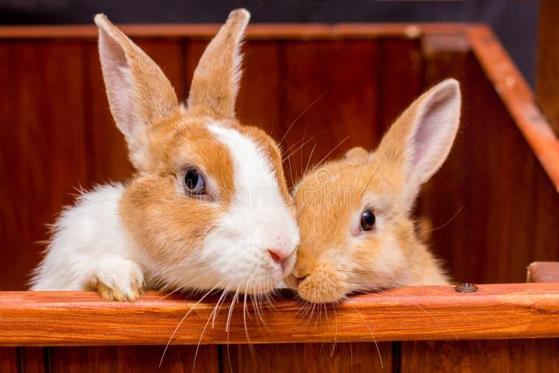 Δύο αρκετά χνουδωτά κουνέλια, mom και μωρό, κοιτάζουν από το cage_ στοκ φωτογραφίες με δικαίωμα ελεύθερης χρήσης