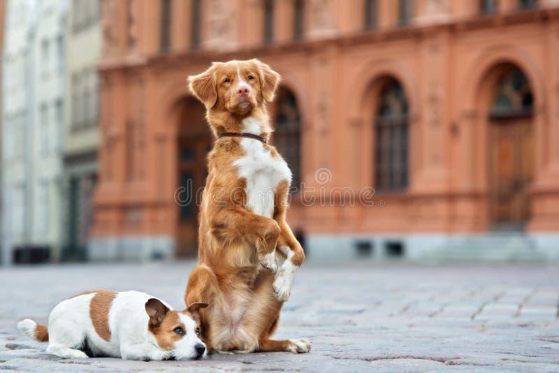 Δύο λατρευτά σκυλιά που θέτουν στην πόλη στοκ εικόνες