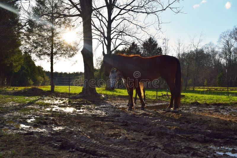 Δύο αδιάκριτα άλογα στοκ φωτογραφίες με δικαίωμα ελεύθερης χρήσης