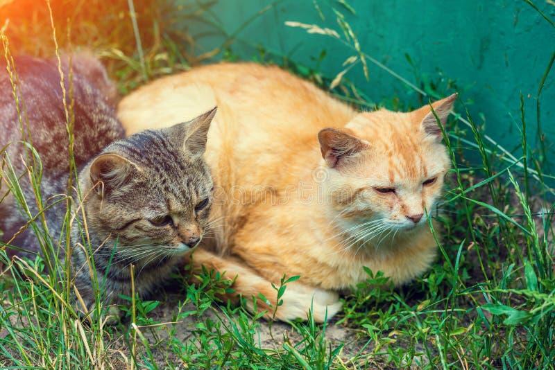 Δύο γάτες κόκκινες και ριγωτές στο ναυπηγείο στοκ εικόνα
