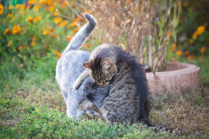 Δύο γάτες που παίζουν στον κήπο στοκ φωτογραφίες με δικαίωμα ελεύθερης χρήσης