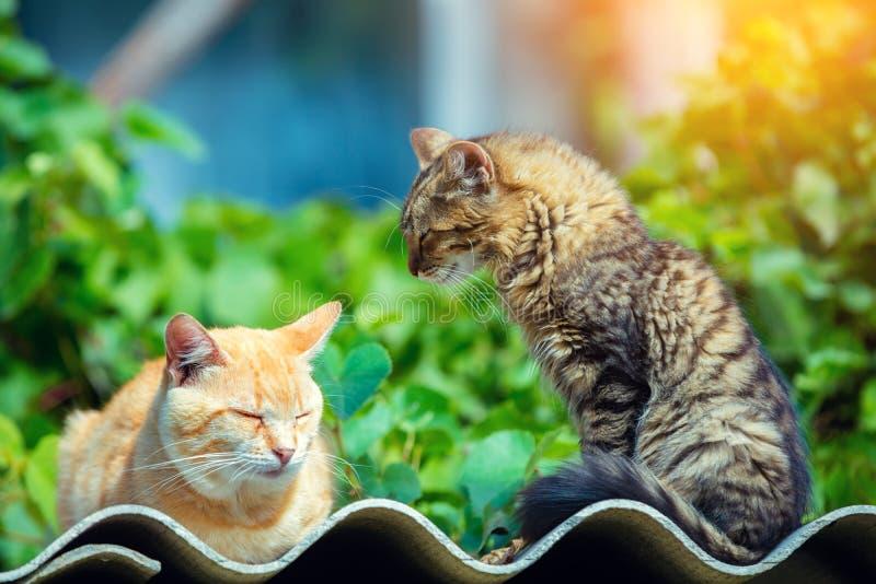 Δύο γάτες που χαλαρώνουν σε μια κυματιστή επιφάνεια υπαίθρια στοκ φωτογραφία με δικαίωμα ελεύθερης χρήσης