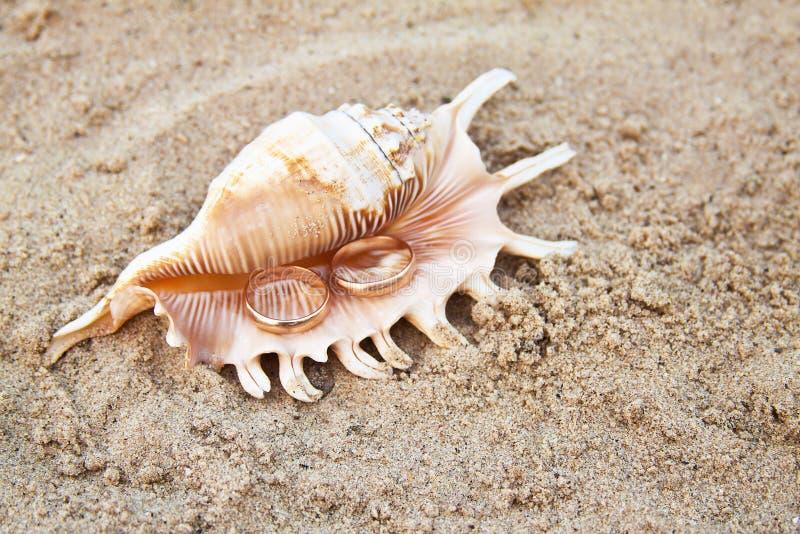 Δύο γαμήλια δαχτυλίδια σε ένα κοχύλι στην άμμο Γαμήλιο δαχτυλίδι στο κοχύλι από την παραλία στοκ φωτογραφία με δικαίωμα ελεύθερης χρήσης