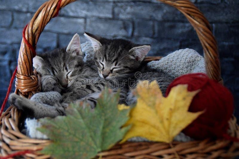 Δύο γατάκια που κοιμούνται σε ένα ψάθινο καλάθι με τα φύλλα και την κόκκινη σφαίρα του strin στοκ εικόνες