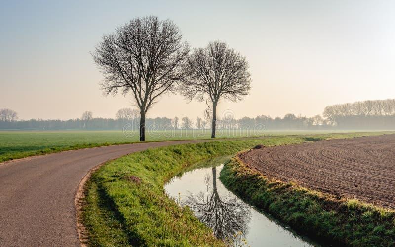 Δύο γυμνά δέντρα δίπλα σε μια εθνική οδό στοκ φωτογραφίες