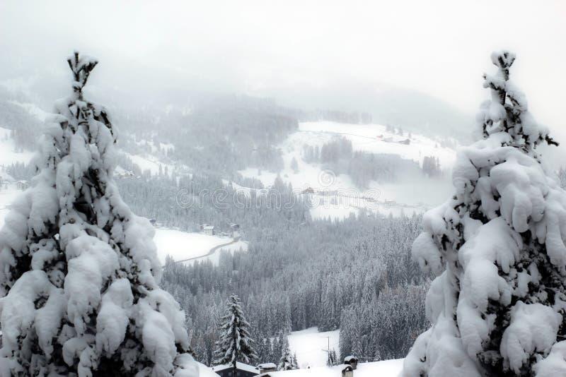 Δύο δέντρα στις Άλπεις στοκ φωτογραφίες