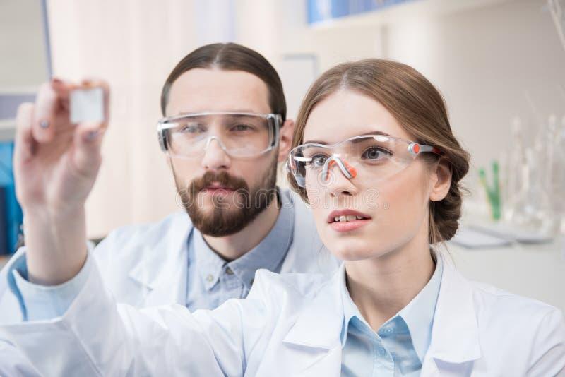 Δύο επιστήμονες στην εργασία στοκ φωτογραφίες