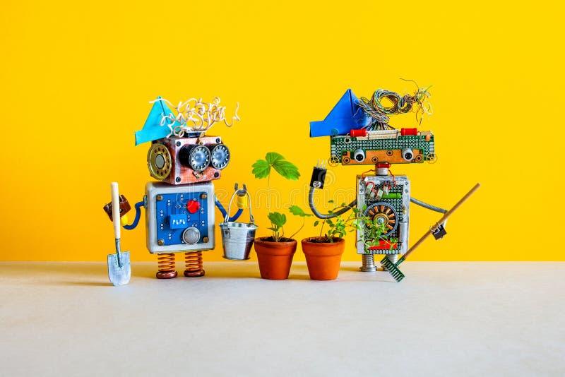 Δύο ευτυχή ρομπότ κηπουρών κτηνοτρόφων που θέτουν με ένα θυμάρι φραουλών φυτεύουν με θάμνους αυξημένος σε ένα δοχείο λουλουδιών Α στοκ εικόνες