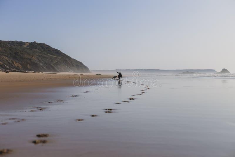 δύο ευτυχή σκυλιά που έχουν τη διασκέδαση στην παραλία Τρέξιμο από την ακροθαλασσιά με την αντανάκλαση στο νερό στο ηλιοβασίλεμα  στοκ φωτογραφίες με δικαίωμα ελεύθερης χρήσης