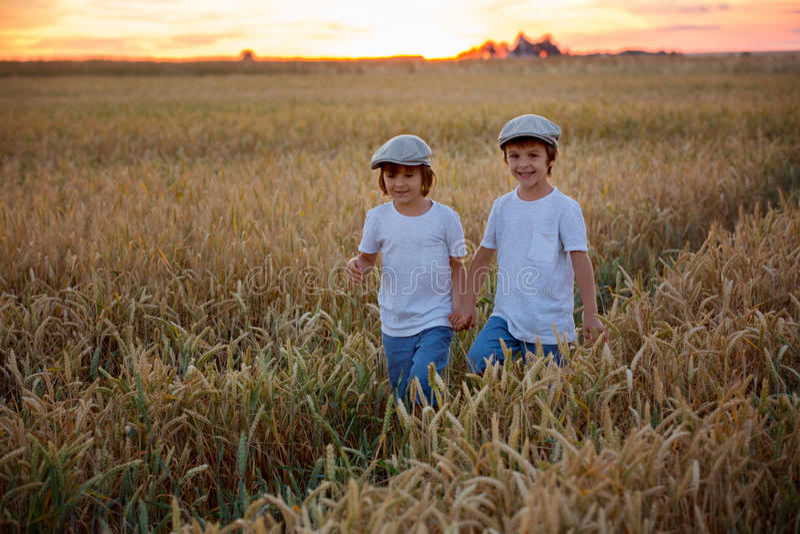 Δύο εύθυμα παιδιά, αγόρια, που περπατούν σε έναν τομέα σίτου στο ηλιοβασίλεμα στοκ εικόνες