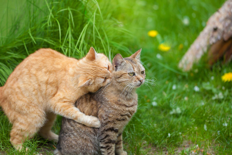 Δύο εύθυμες γάτες στοκ φωτογραφίες