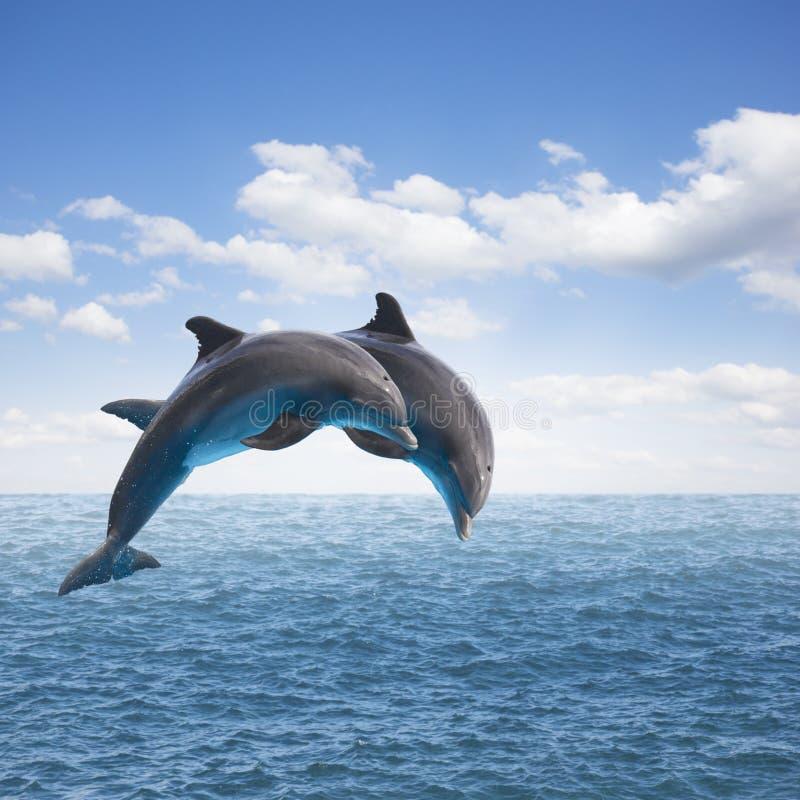 Δύο δελφίνια άλματος στοκ φωτογραφίες με δικαίωμα ελεύθερης χρήσης