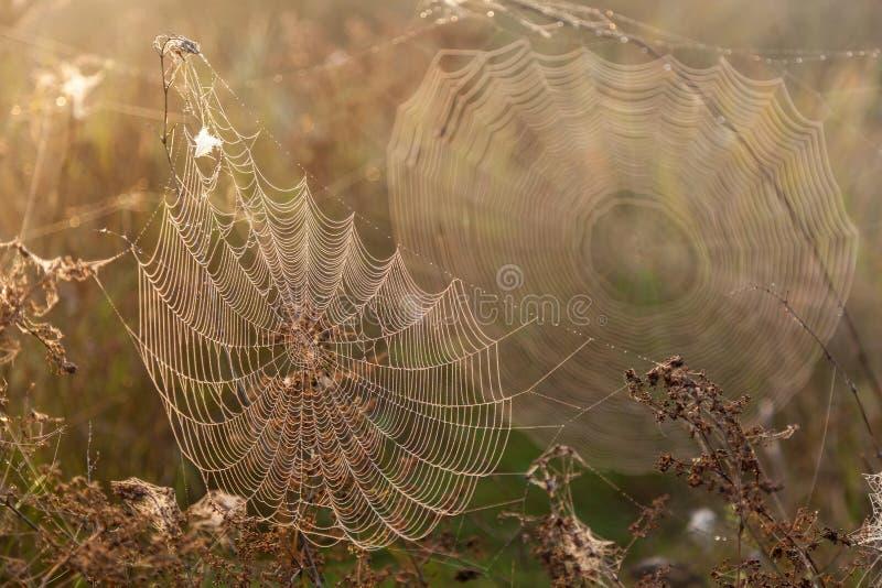 Δύο Ιστοί της αράχνης στοκ φωτογραφία με δικαίωμα ελεύθερης χρήσης