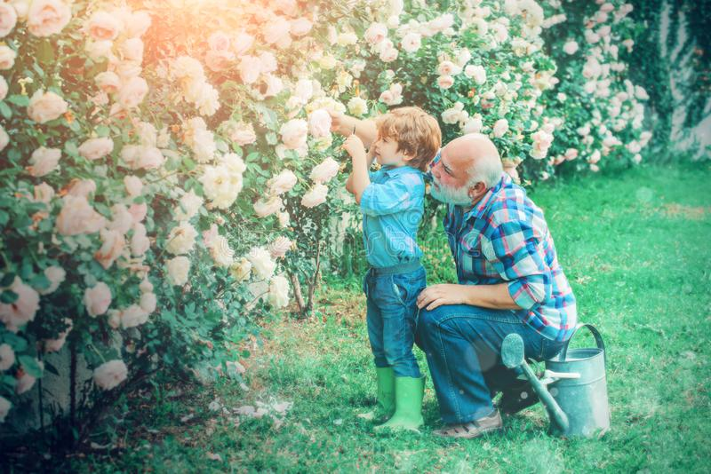 Δύο κηπουροί - παππούς και εγγονός με λουλούδια Ο παππούς μιλάει στον εγγονό στοκ εικόνες