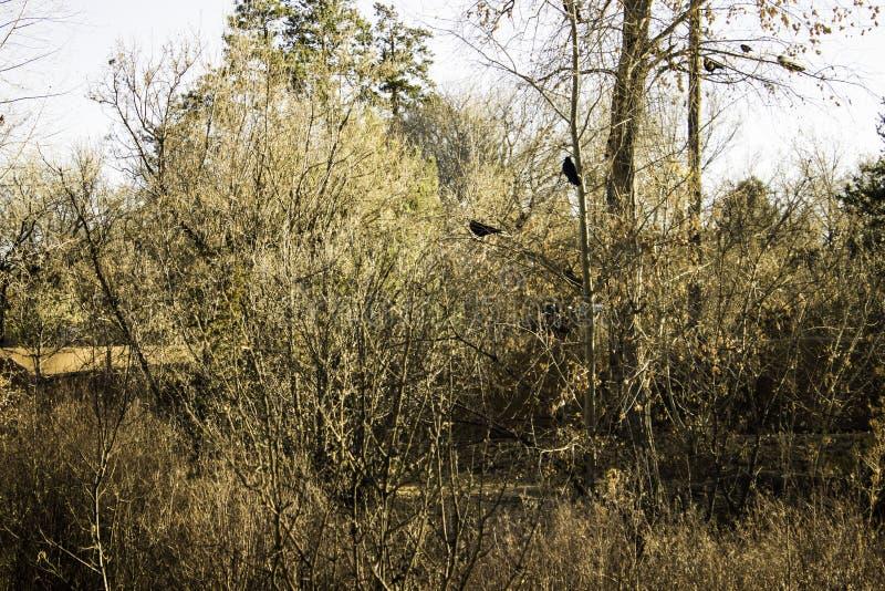 Δύο κρυμμένοι κόρακες στοκ φωτογραφίες