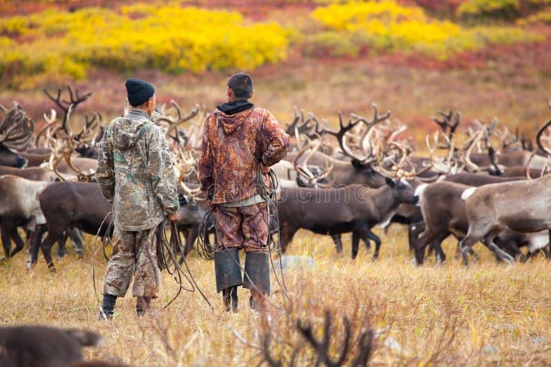 Δύο κτηνοτρόφοι ταράνδων στο υπόβαθρο caribou του κοπαδιού το φθινόπωρο στοκ φωτογραφίες
