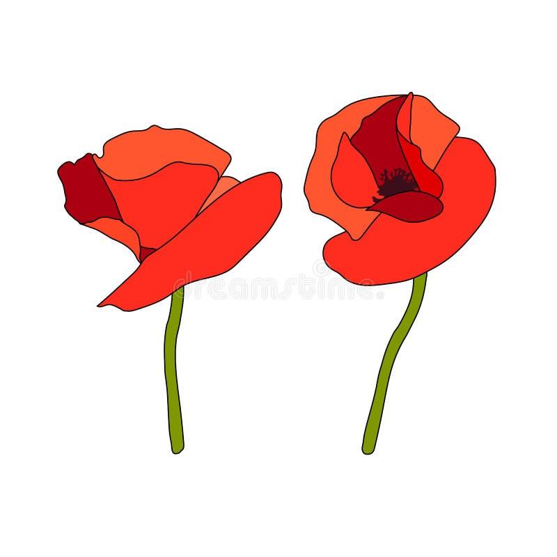 Δύο κόκκινοι κεφάλια και μίσχοι λουλουδιών παπαρουνών anzac r Επίπεδο ύφος σκίτσων Πέταλα της Scarlett Ημέρα της ενθύμησης r ελεύθερη απεικόνιση δικαιώματος